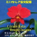C.Grace Kako ' Rouge Chateau'C.グレース カコ'ルージュ シャトー'5000円以上購入で送料無料。
