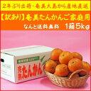 【送料無料】訳あり奄美たんかんご自宅用5kg【サイズ指定なし】