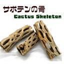 サボテンの骨 1個【カクタススケルトン】【カクタスボーン】【サイズ(約)・長さ10〜17cm・直径4〜9cm】