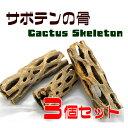 【お買い得】サボテンの骨 3個セット【カクタススケルトン】【カクタスボーン】【サイズ(約)・長さ10〜17cm・直径4〜9cm】
