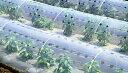 ユーラック換気 長さ100m×孔3列×幅210cm