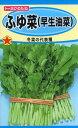 ふゆ菜 (早生油菜) 種子 たね 品番5197