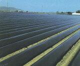黒マルチ 厚さ0.02mmX幅150cmX長さ200m 3本セット 雑草の抑制効果が高い畑用黒マルチです。