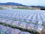 農ポリ(透明マルチ) 厚さ0.03mm×幅135cm×長さ100m