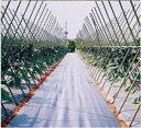 アグリシート シルバーグレー 長さ100m×幅50cm 遮光性が高く、防草効果抜群の防草シートです。(雑草防止シート 雑草シート 庭 雑草対策 農業資材 草防止...