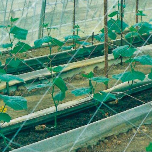 キュウリネット 白緑 18cm目×幅180cm×長さ18m