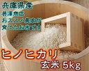 Hinohikari_05