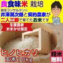 Hinohikari_10_3