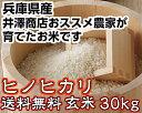Hinohikari_30