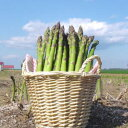 Tokachi product: 1 kg of green asparagus [i]