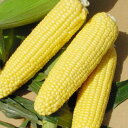 Tokachi product: &quot;I send corn &quot;&quot; 20 in August&quot; [i]
