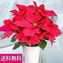 鉢植えポインセチア「6号レッド」◆お歳暮、クリスマスギフト、プレゼント用のギフトに最適。◆標準的な仕立てでお手頃価格10P03Dec16
