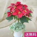 鉢植えポインセチア「スタンド6号・レッド」◆お歳暮、クリスマスギフト、プレゼントに最適。◆コンパクト