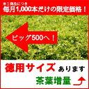 粉末緑茶 アイテム口コミ第5位