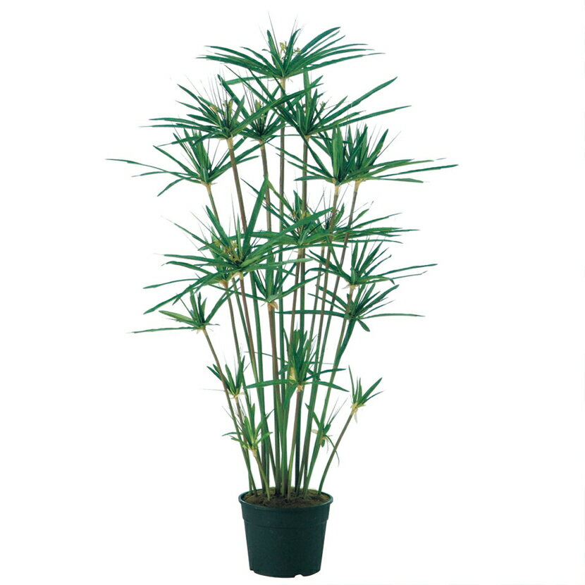 観葉植物 人工 樹木 シペラス鉢 高さ1000mm Sサイズ 鉢:簡易ポット