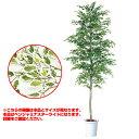 観葉植物 人工 樹木 ベンジャミナスターライトセパレート 高さ3000mm LLサイズ 鉢:懸崖13号