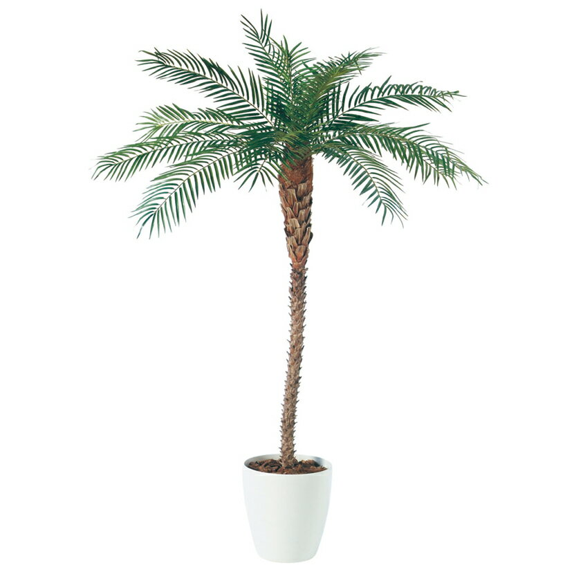 観葉植物 人工 樹木 フェニックス(天然幹) 高さ2000mm Lサイズ 鉢:RP-370