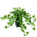 楽天オフィスグリーン楽天市場店新商品【ジャーマン アイビー MIX】W45cm×H25cm×L35cmフェイクグリーン 人工観葉植物 インテリアグリーン オフィスグリーン 人工樹木 造花 卓上グリーンアイビー