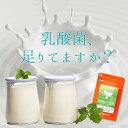 乳酸菌 & オリゴ糖 (約3ヶ月分) 送料無料 ダイエット ...