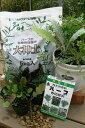 【送料無料】ハーブ栽培セット ハーブ苗8種 ハーブ苗
