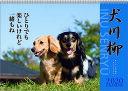 【エントリーでポイント10倍】2018年8月 月間優良ショップ受賞!2020年 カレンダー 犬 犬川柳 ダックス川柳 月めくり 9月より発売開始 1000109212