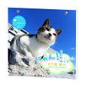 2020年 カレンダー 猫 にゃん!!めくり リフィル 替え用 五十嵐 健太1000109224