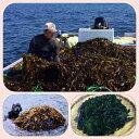 淡路島 天然わかめ 紀淡海峡(由良)国産 肉厚(湯どうし塩蔵生わかめ(塩わかめ))1部茎つきです150g×10 水でもどしてください 鍋用わかめ 天婦羅用わかめ 送料無料 セット
