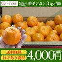 【送料無料】大分県杵 築市産 小粒だから味が濃いポンカン 3kg箱×4箱 【2月末まで販売】