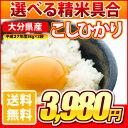 Kohi-3980