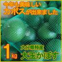 25-kabosu-01