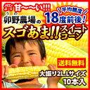 Corn500