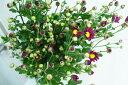 コギク アカ(季節の赤小菊)5本 切花 リース 材料 02P03Dec16