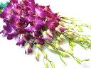 デンファレ(ソニアなど)5本 切花 生け花 花材