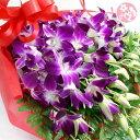 洋蘭:デンファレとグリーンの花束【送料無料】供花 常温便 お中元 サマーギフト サマーギフト