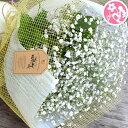 かすみ草 カスミソウ 花束 花 誕生日 結婚祝い お礼 歓送迎 かすみ草とグリーンの花束 ドライフラワー 送料無料 フラワー送別 歓迎 退職祝い 母 誕生日