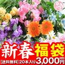 花 誕生日 結婚祝い プレゼント ギフト ハッピーフラワー福袋♪【送料無料】ラッキーバック 花