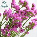 RoomClip商品情報 - スターチス (フラッシュピンクなど)5本 切花 生け花 ハーバリウム花材ドライフラワーに最適