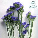 RoomClip商品情報 - スターチス (サンデーバイオレットなど)5本 生花からドライフラワー ハーバリウム花材 切花 生け花 花材