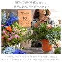 すいとん粉500g 日東富士製粉(東京都中央区)【送料別】