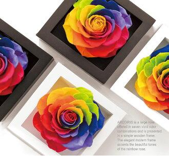 七福系列花卉禮品花卉保留彩虹玫瑰幀玫瑰生日禮物花的花婚禮紀念,婚禮鮮花花結婚周年紀念日,他心愛的妻子,情人節的禮物