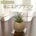 多肉植物 エアプランツ フェイクグリーン インテリアグリーン...