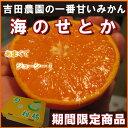 吉田農園のせとか1箱(約2.5kg)セトカ【フルーツ】【普通便】