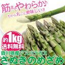【送料無料】海のグリーンアスパラガス「さぬきのめざめ」1kg...