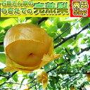 【梨・秀品】石島さん家のもぎたて完熟梨【秀品】5kg幸水梨・豊水梨・あきづき梨・新高梨・新興梨収穫後
