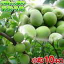お得用!【小粒サイズ】小西さん家の青梅(南高梅)10kg【ち...