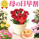 母の日 プレゼント 花 ギフト カーネーション 生花 鉢植え 送料無料 スイーツ お菓子 ギフトセット スイーツセット 母の日ギフト