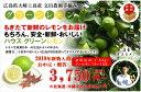 【送料無料】広島県大崎上島産ハウスグリーンレモン 防腐剤不使用 良品1.5kg(約12玉〜15玉)