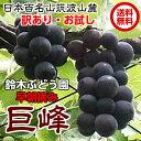巨峰 種あり 送料無料 巨峰ブドウ 葡萄 ぶどう ブドウ 約1.5kg 訳あり ご家庭用