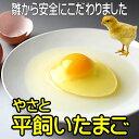 卵 タマゴ 「やさと平飼い卵M20個」 送料無料 安全安心 ...