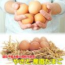 卵 タマゴ 「やさと産直たまご L20個」 送料無料 安全安心 産み立て産地直送 卵 たまご 玉子 茨城 送料無料 ギフト お取り寄せ